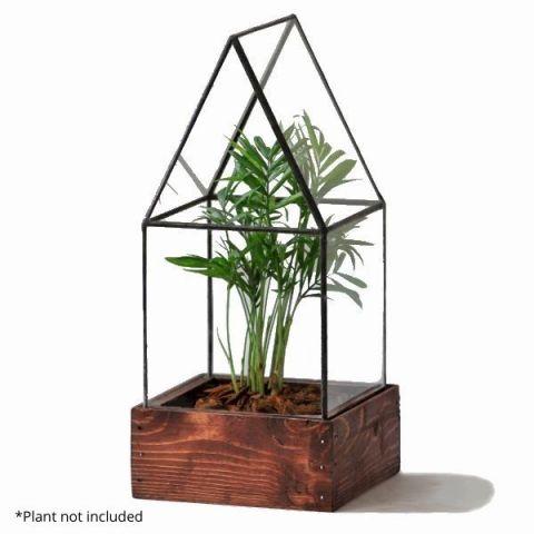 Cape Cod Terrarium With Example Plant
