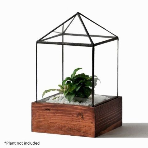 Clear House Terrarium With Example Plant