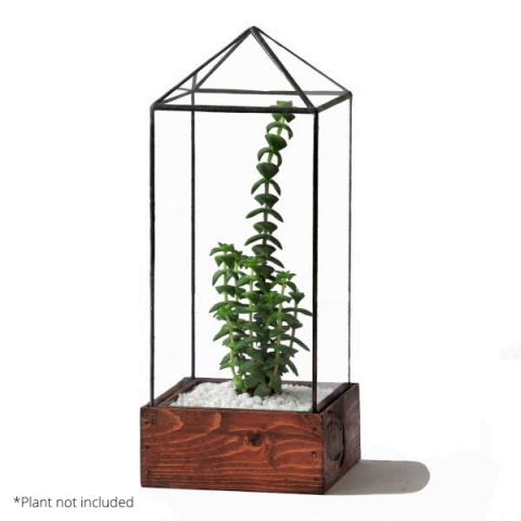 Clear Tower Terrarium With Example Plant
