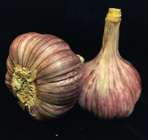 Duganski Purple Stripe Garlic