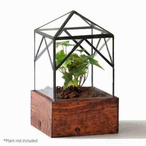 Ellias Trap Terrarium With Example Plant