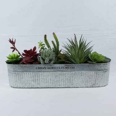 Galvanized Succulent