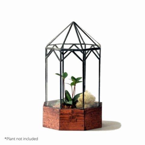 Gazebo Terrarium With Example Plant