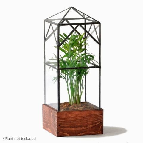 North Tower Terrarium WIth Example Plant
