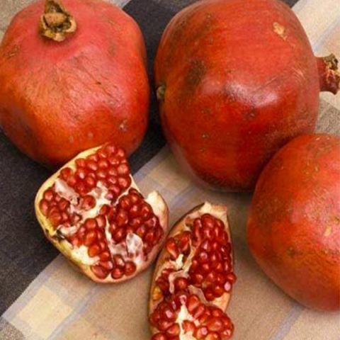 Red Silk Pomegranate
