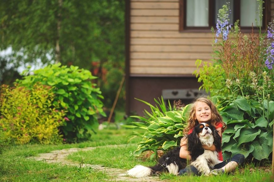 How To Maintain A Backyard That's Safe For Pets