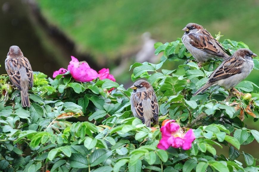 The 5 Best Shrubs for Nesting Birds