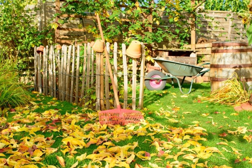 7 Best Gardening Tools for the Fall Season