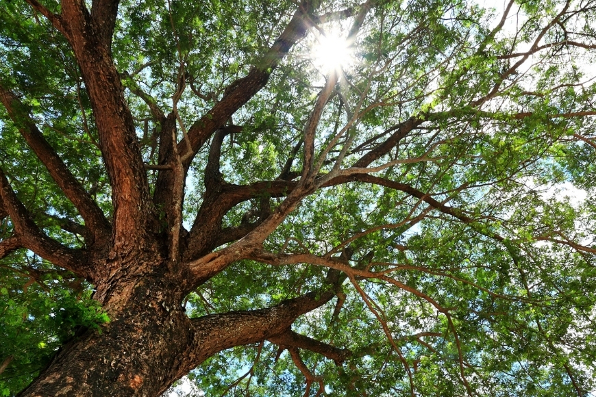 Which Trees Are Great For Shade In The Summer