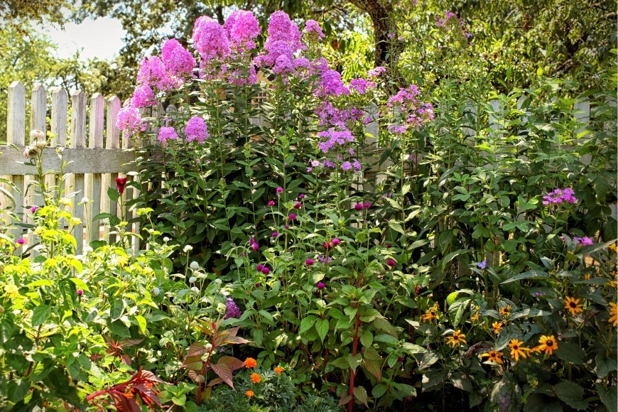 A Guide To Summer Plant Care