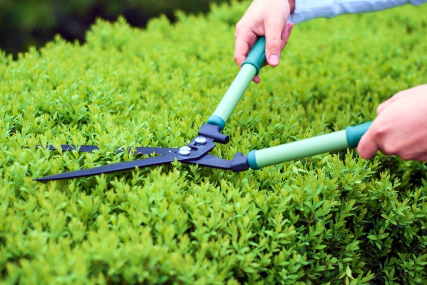 5 Simple Tips To Trim Your Hedges