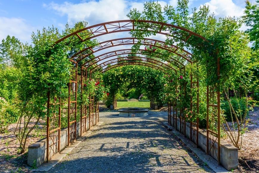 Vines: The New Outdoor Decor