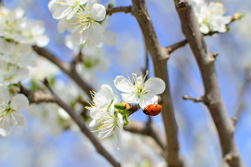 5 Overlooked Beneficial Garden Bugs & The Bad Bugs They Prey On
