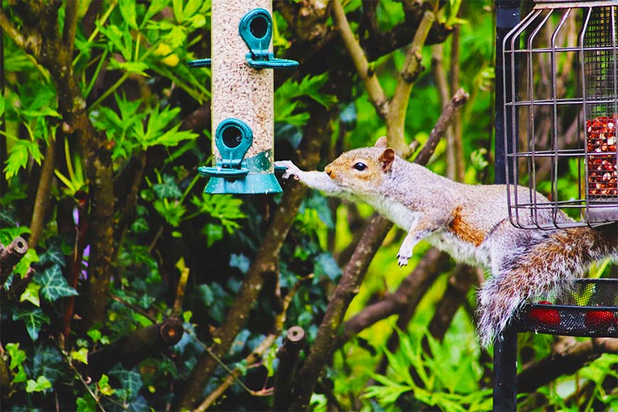 Win the Battle with Squirrels: Birdfeed's Arch Enemy