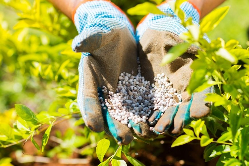 Fertilizing: A How-To Guide for the Brand New Gardener