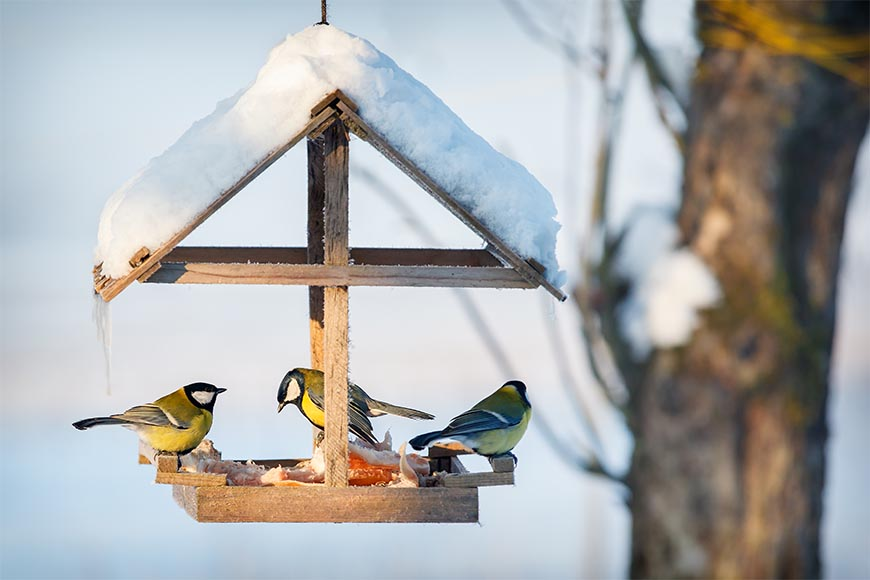 Helping out backyard birds during winter; Food, Water, Shelter.