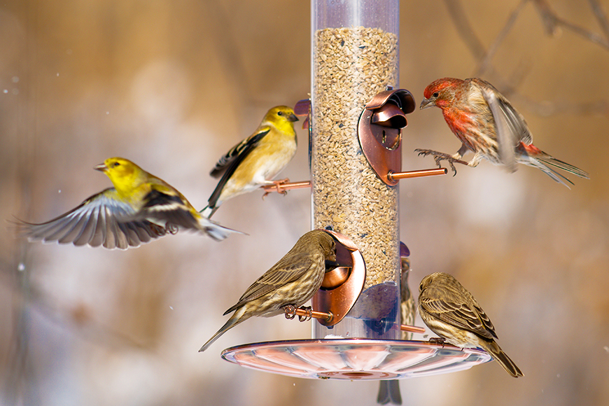 The Best Bird Feeders On The Market