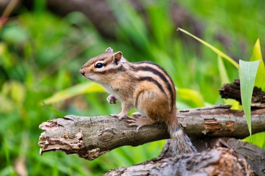 Plants that Attract Small Mammals & Birds